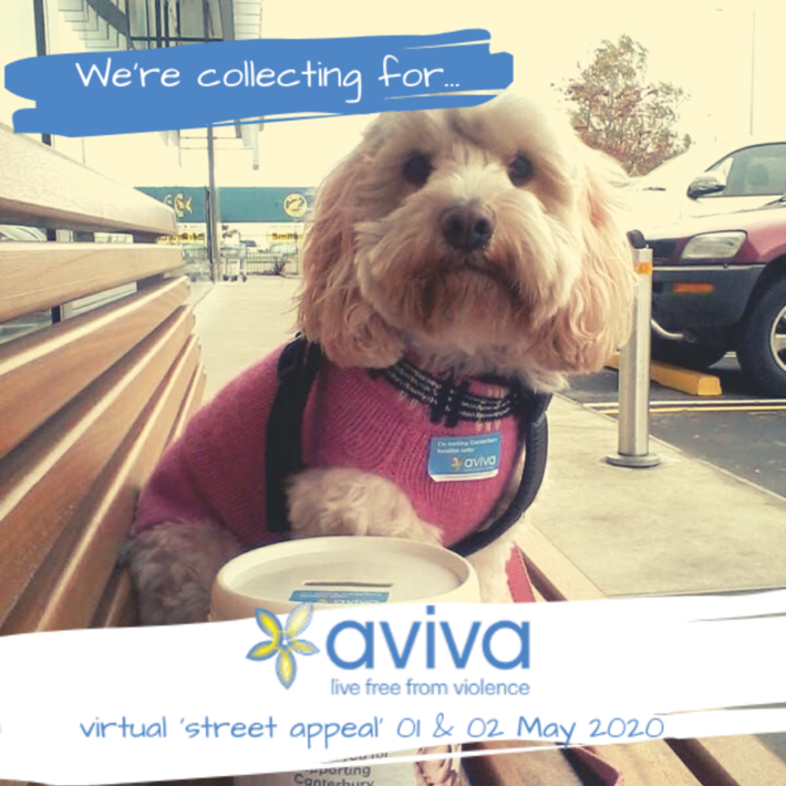 Dog with Aviva nametag and Aviva donation collection bucket